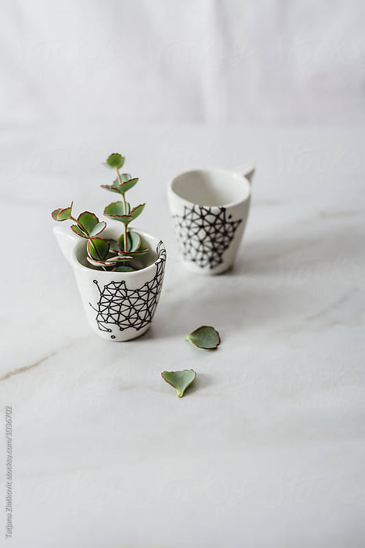 Porcelain cups with eucalyptus by Tatjana Ristanic for Stocksy United