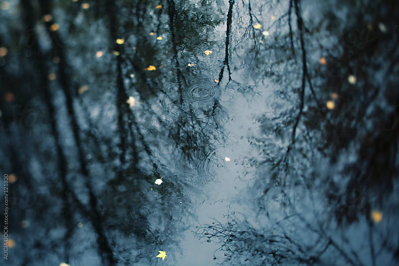 Reflecting on Rain by ALICIA BOCK for Stocksy United
