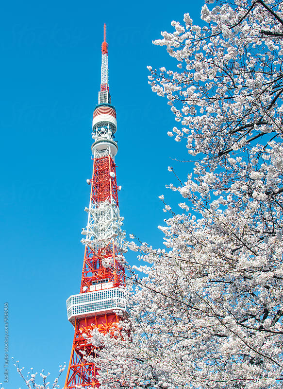 Cherry Blossoms And Tokyo Tower by Leslie Taylor for Stocksy United