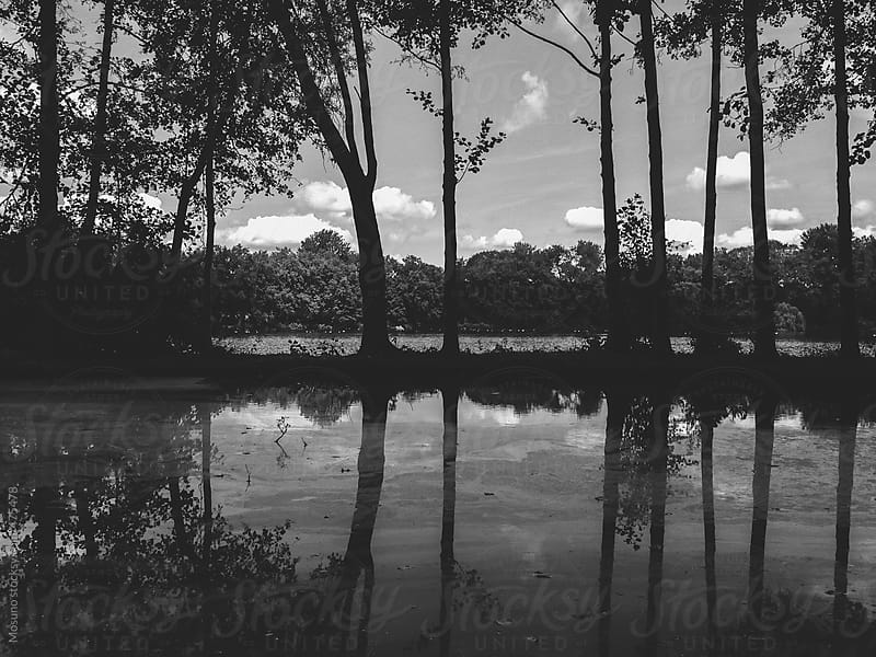 Lake in Black and White  by Mosuno for Stocksy United