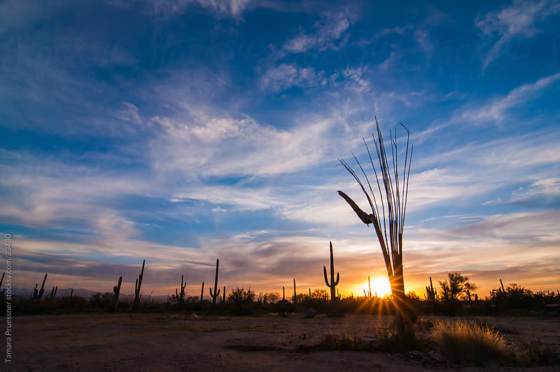 Desert Sunset With Cactus And Sunburst by Tamara Pruessner for Stocksy United