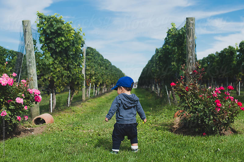Baby playing in vineyard by Lauren Naefe for Stocksy United