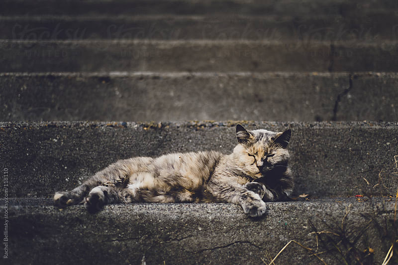 A blind calico stray cat rests on concrete steps by Rachel Bellinsky for Stocksy United