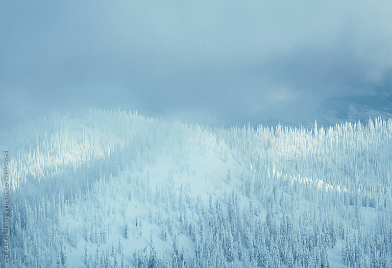 A scenic view of a snow and forested mountains in winter by Sarah Ehlen Photography for Stocksy United