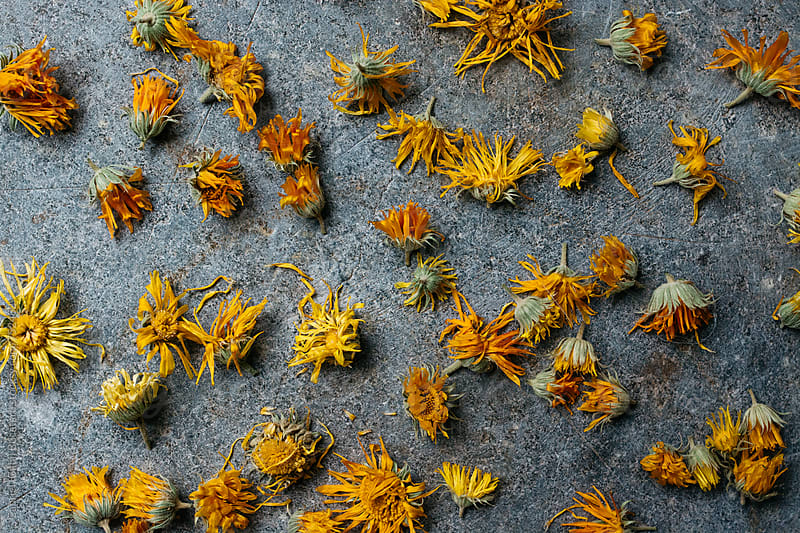 Dried marigold flowers from above by Gabriel (Gabi) Bucataru for Stocksy United