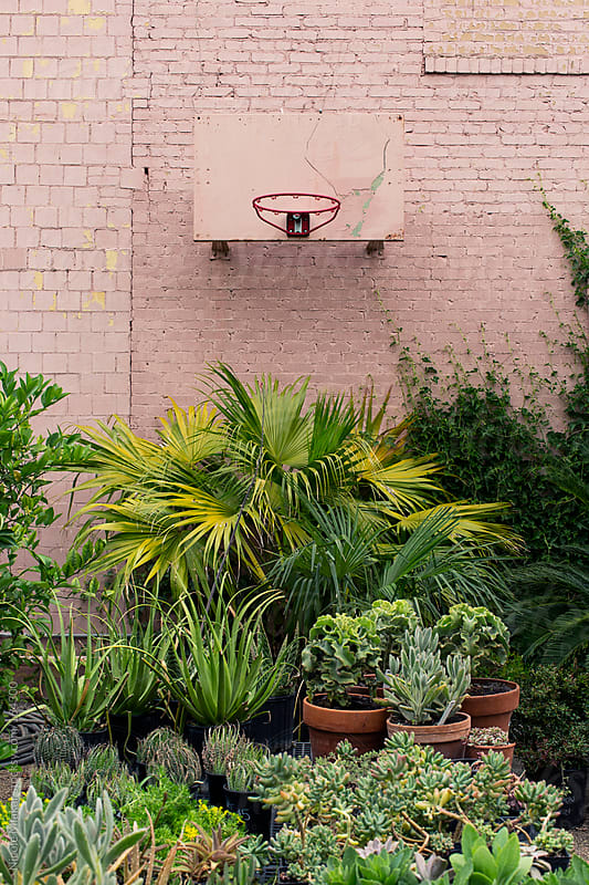 Plant nursery by Nicole Mlakar for Stocksy United