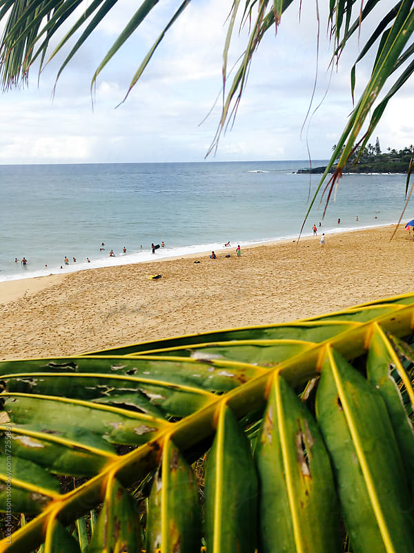 View Of A Hawaiian Beach Above A Palm Leaf by Luke Mattson for Stocksy United