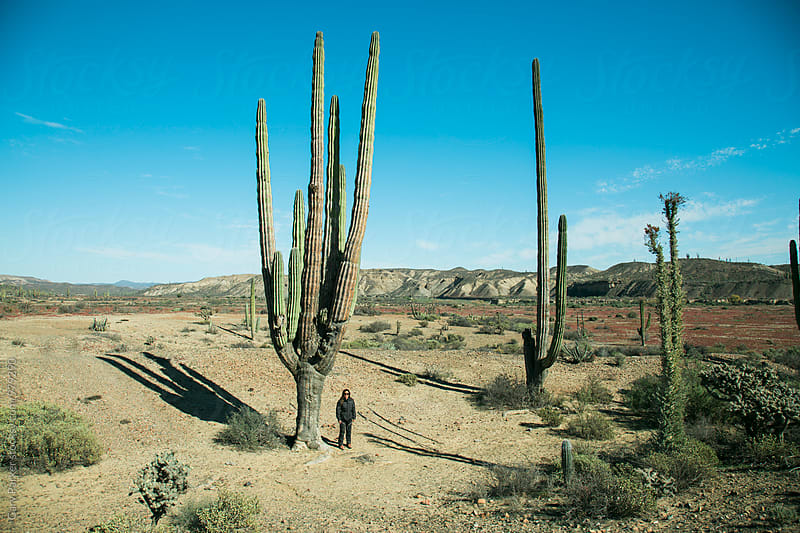 Woman standing next to a giant cactus by Gary Parker for Stocksy United