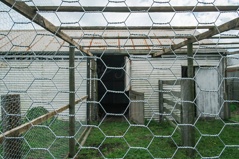 Constructing the Chicken Shed by Rowena Naylor for Stocksy United