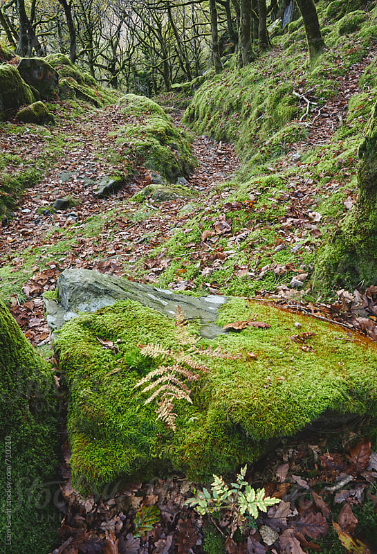Moss covered woodland. Nanmor Valley, Wales, UK. by Liam Grant for Stocksy United