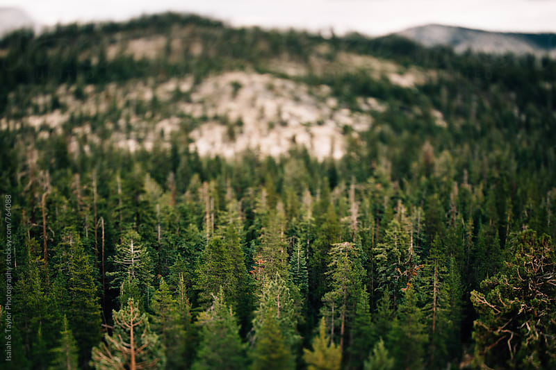Trees and mountain by Isaiah & Taylor Photography for Stocksy United