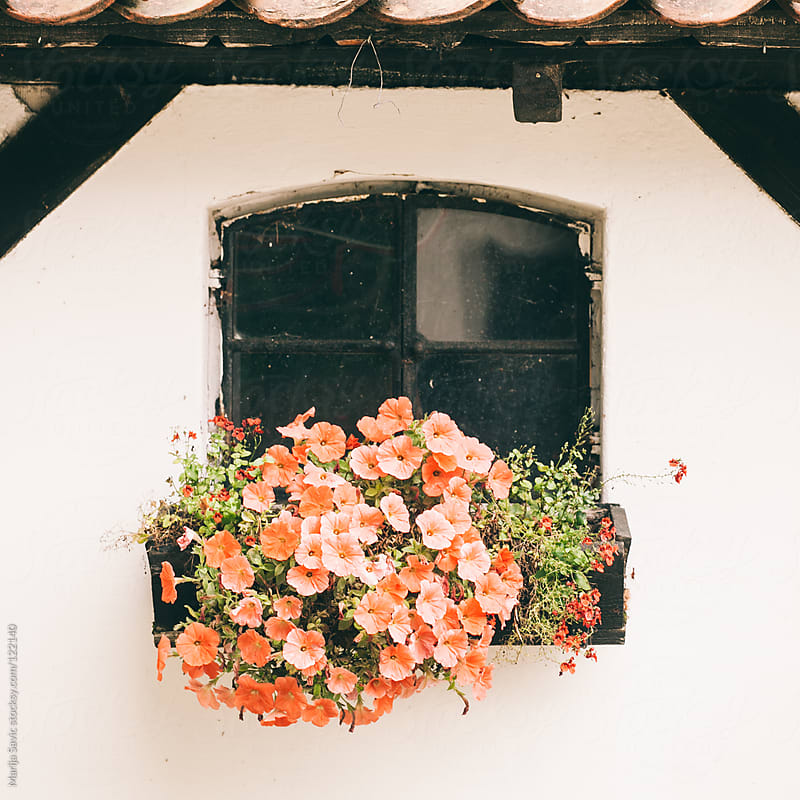 Rustic window with flowers.  by Marija Savic for Stocksy United