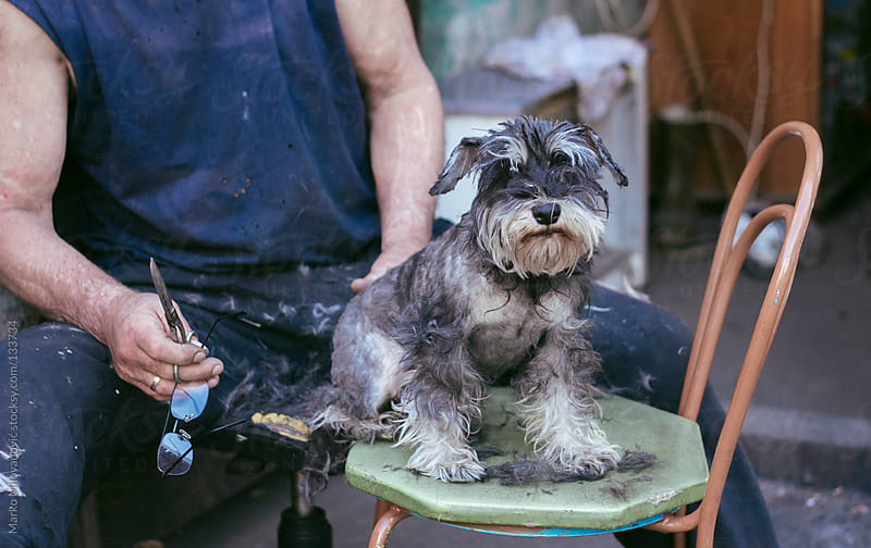 Dog having haircut by man by Marko Milovanović for Stocksy United