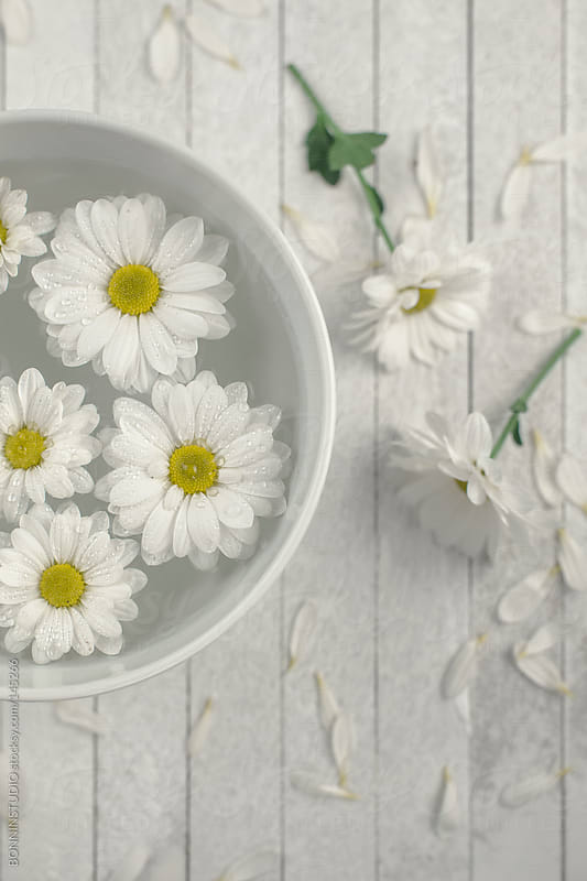 Closeup of daisies in a bowl of water. Wooden background with petals. by BONNINSTUDIO for Stocksy United