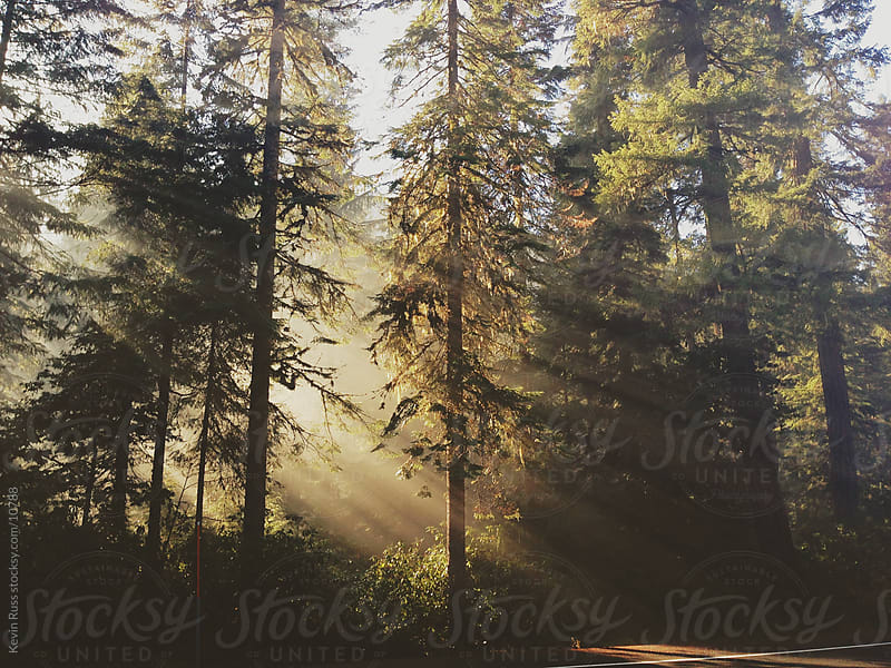 Sunbeam Forest by Kevin Russ for Stocksy United