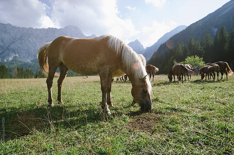Free horses in the wild by GIC for Stocksy United