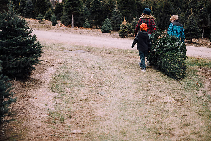 three kids pulling a christmas tree by Léa Jones for Stocksy United