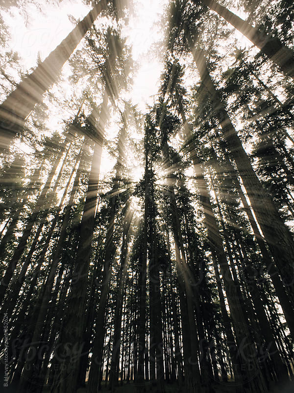 Beautiful Rays of Light Coming Through Trees by B. Harvey for Stocksy United