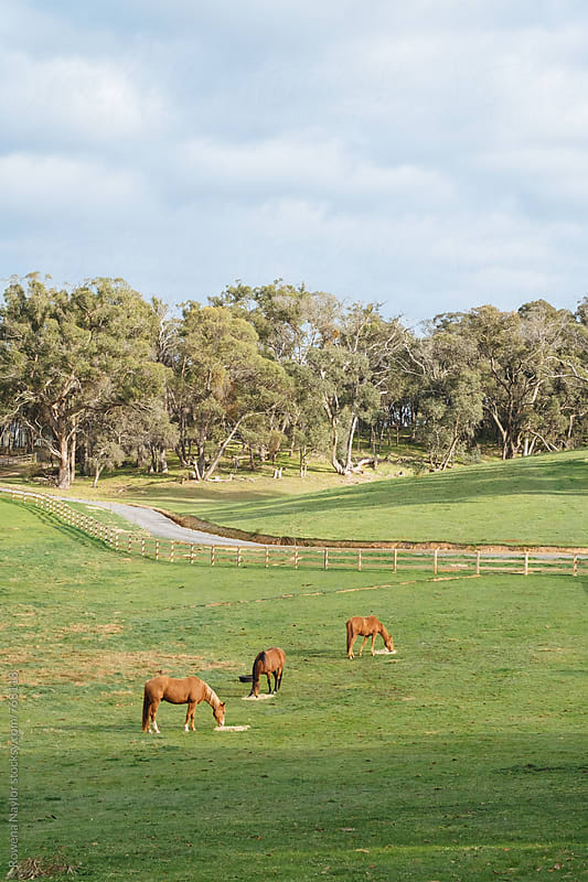 Three horses on country homestead by Rowena Naylor for Stocksy United