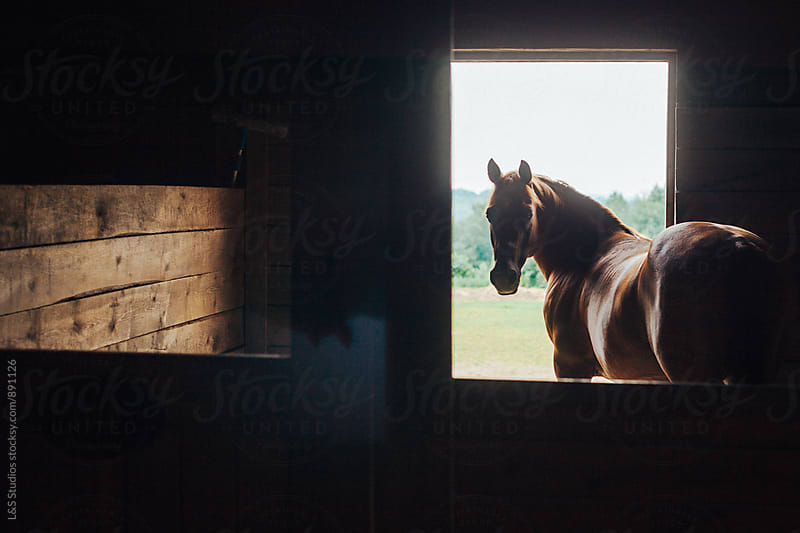 Horse Barn by L&S Studios for Stocksy United
