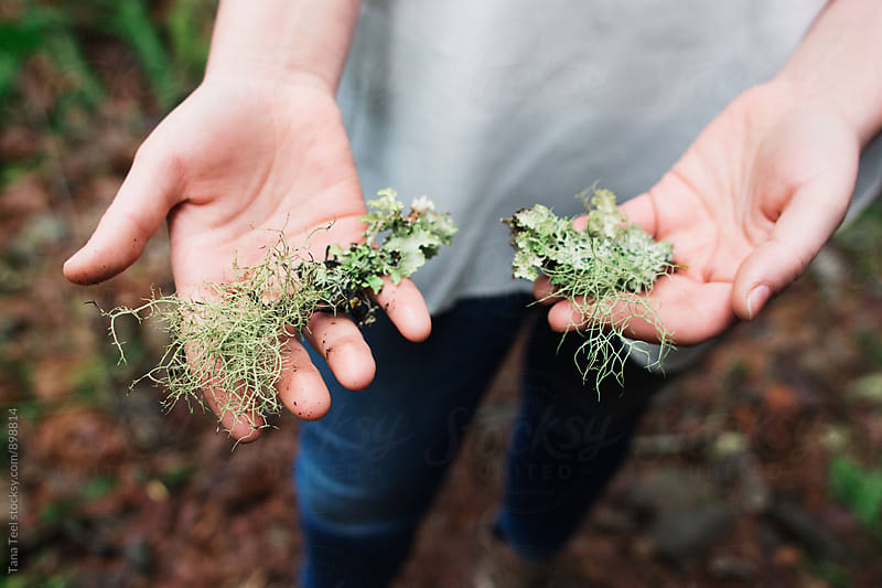 woman holds moss in hands by Tana Teel for Stocksy United