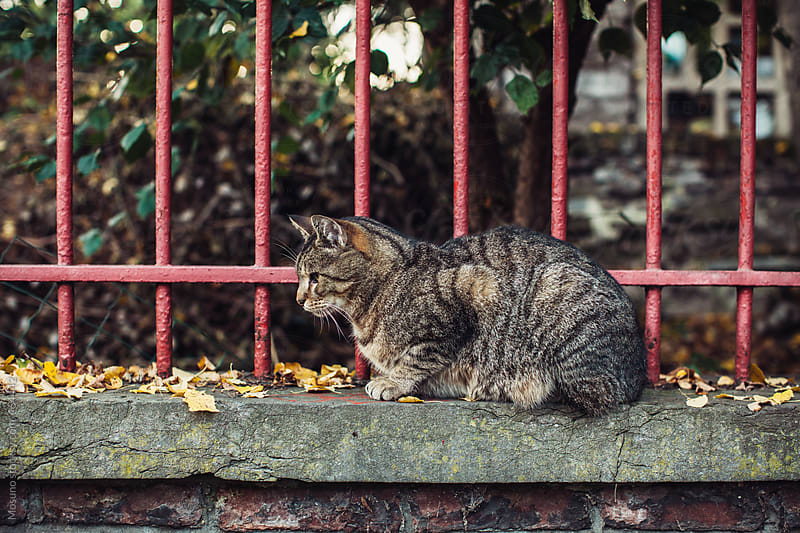 Cute Street Cat Lying on a Fence by Mosuno for Stocksy United