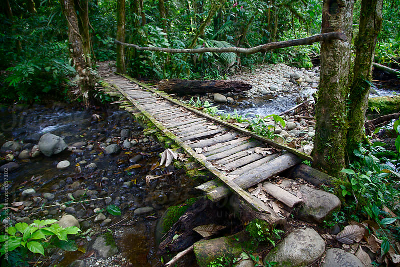 A handmade wooden jungle bridge over a small stoney river, surrounded by lush trees, Ecuador by Jaydene Chapman for Stocksy United