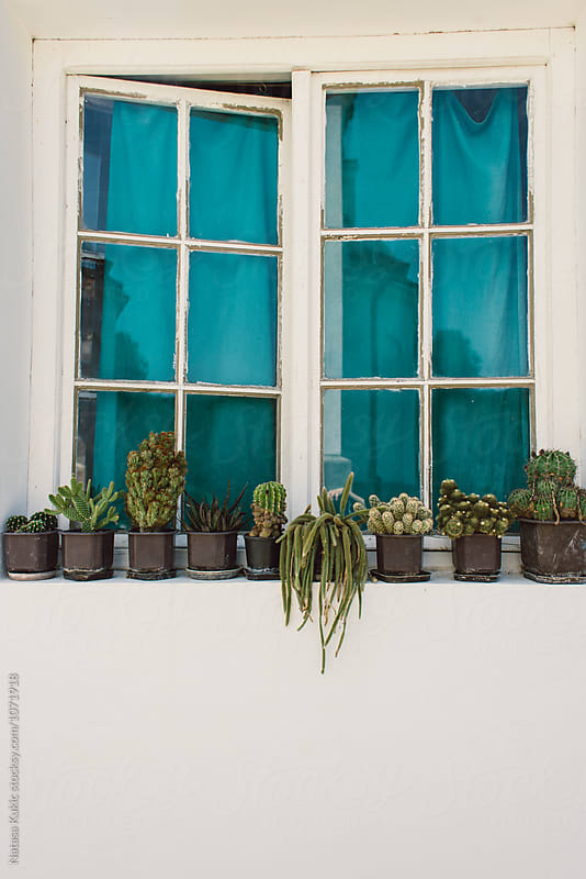 Lots of cactuses in the window with green curtains by Natasa Kukic for Stocksy United