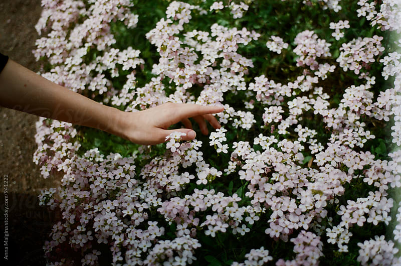 A film photo of hand touching flowers by Anna Malgina for Stocksy United