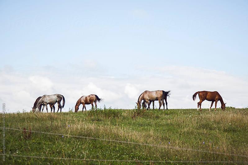 Portrait of Horses by Alie Lengyelova for Stocksy United