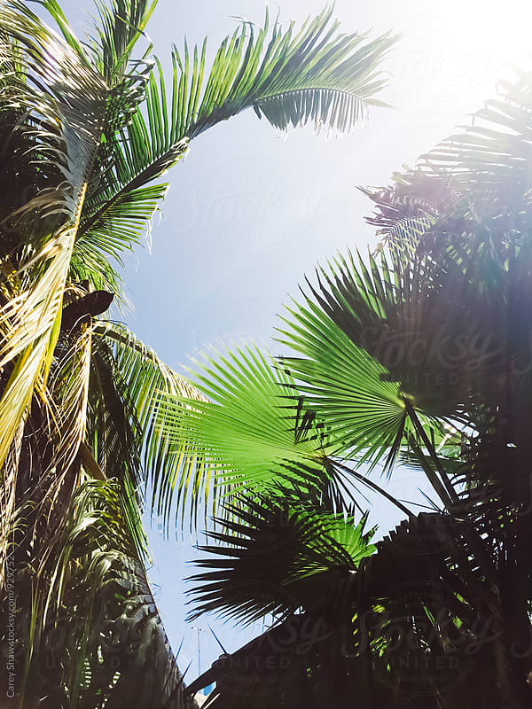 Sun shining on tropical plants and Palm Trees by Carey Shaw for Stocksy United
