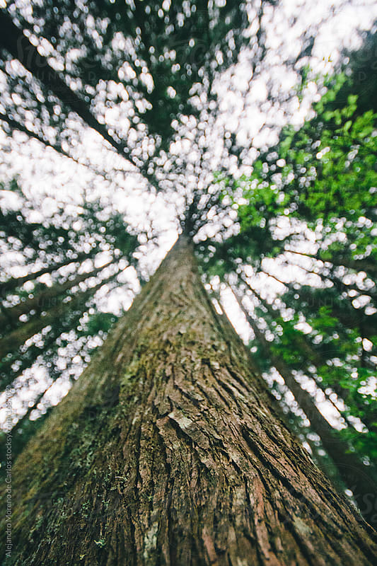 Tree trunk from low angle and light rays on forest by Alejandro Moreno de Carlos for Stocksy United
