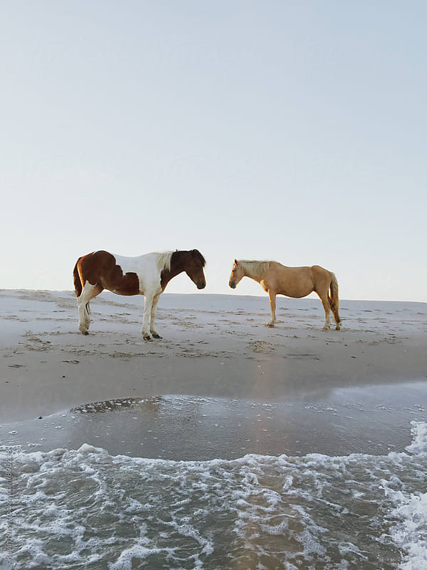 Wild Horses Facing Each Other on the Beach by Kevin Russ for Stocksy United