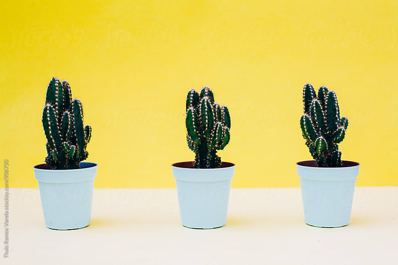 cactus treesom behind yellow wall  by Thais Ramos Varela for Stocksy United
