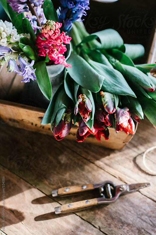 Red parrot tulips and hyacinths in a reclaimed wooden box. by Helen Rushbrook for Stocksy United