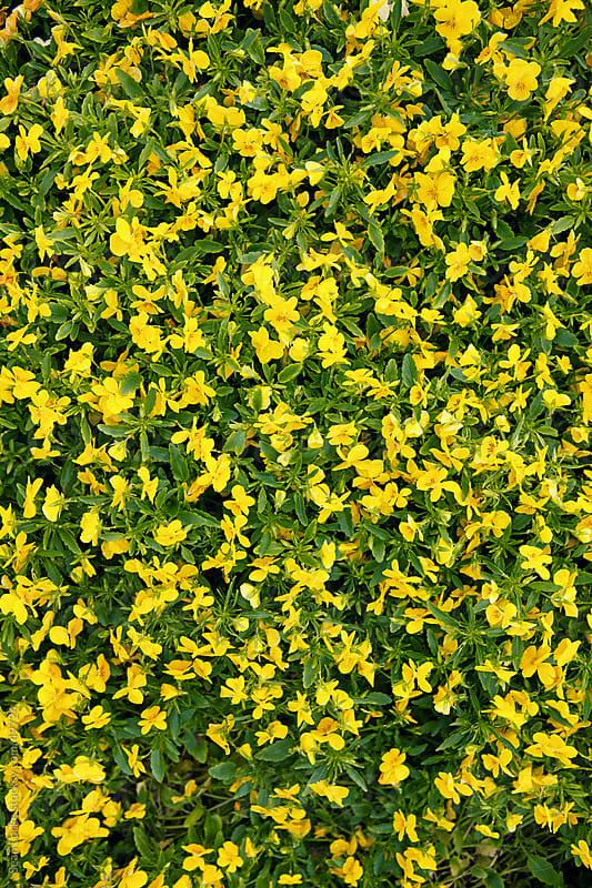 Nursery: Wet Annual Flower Background by Sean Locke for Stocksy United