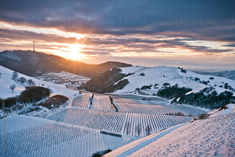 Sun Shining on Winter Landscape with Vine Yards by Andreas Wonisch for Stocksy United