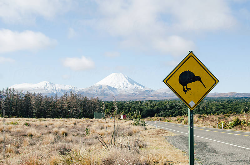 Road leading to Mount Ngauruhoe with a kiwi bird sign by Dominique Chapman for Stocksy United