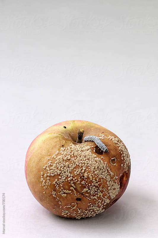 Rotten apple with caterpillar by Marcel for Stocksy United