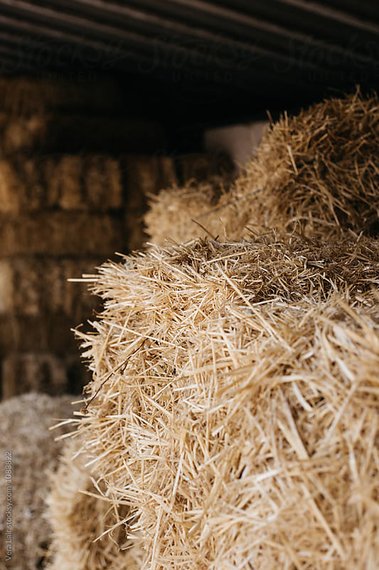 Stacks of dry hay in barn by Vera Lair for Stocksy United