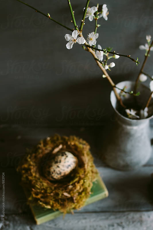Still life of white blossom in a jug with a nest and egg. by Helen Rushbrook for Stocksy United