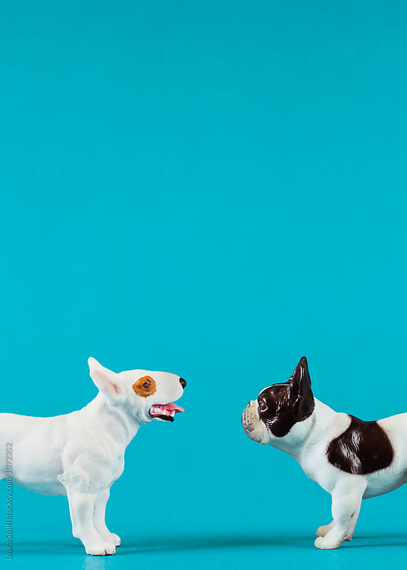 Side view of two miniature dogs  (American   Terrier and french bulldog) facing each other  by Laura Stolfi for Stocksy United
