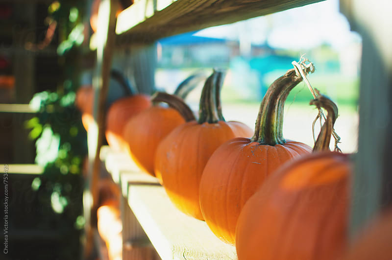 Pumpkins at a farm stand. by Chelsea Victoria for Stocksy United