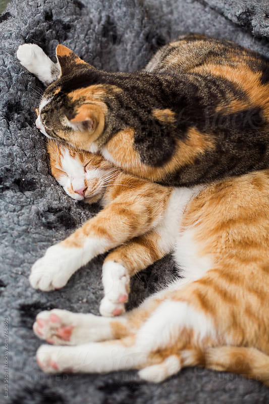 Adorable cats hugging while sleeping together in woolen kennel by Laura Stolfi for Stocksy United