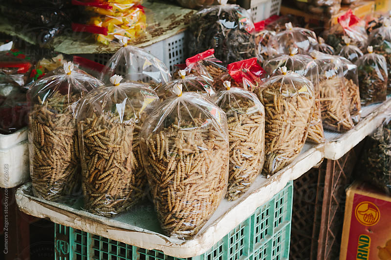 worms in bags at Burmese market by Cameron Zegers for Stocksy United