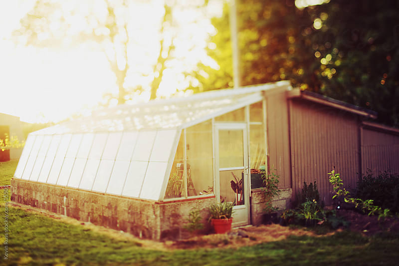 Sunset Greenhouse by Kevin Russ for Stocksy United
