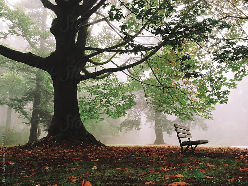 Bench Under Foggy Park Tree by Eric Bowley for Stocksy United