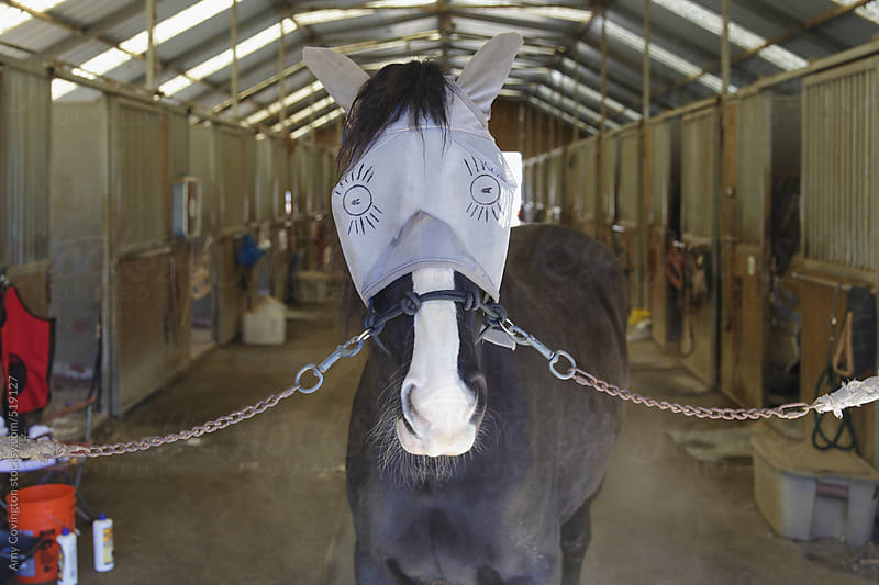 A horse with silly eyes drawn on it's fly mask by Amy Covington for Stocksy United