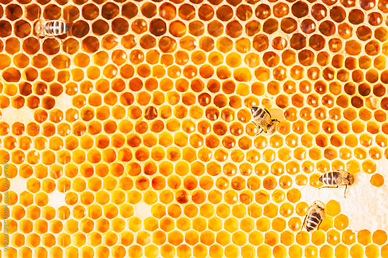 Honeybees at Work by Julien L. Balmer for Stocksy United