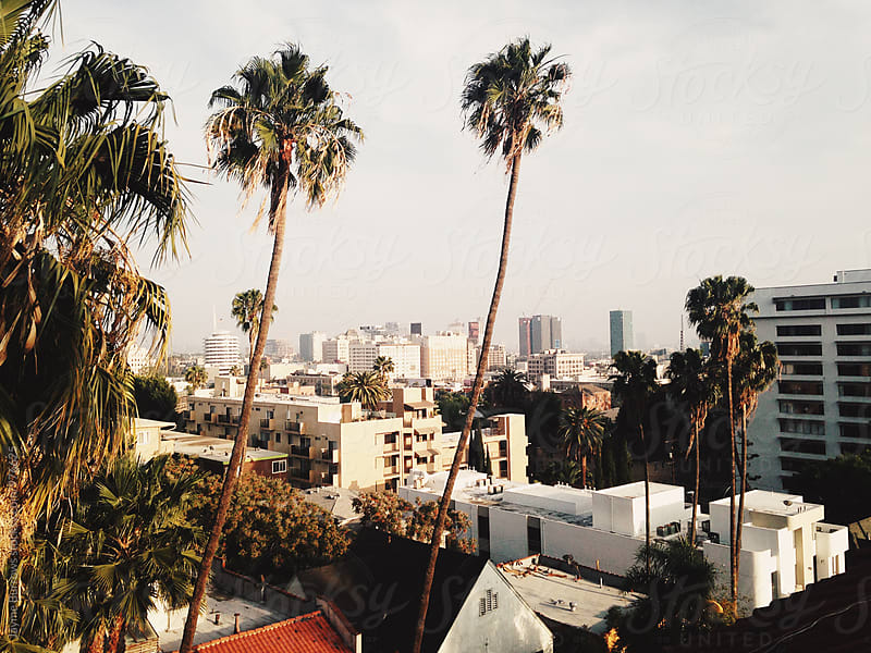 Hollywood Palms by Jayme Burrows for Stocksy United